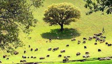رویداد گردشگری روستایی در دو استان غربی کشور و تحلیل آن