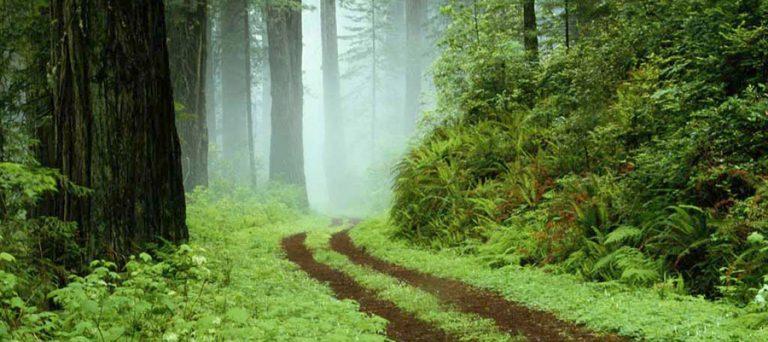 ثبت جهانی جنگل های هیرکانی در ایران