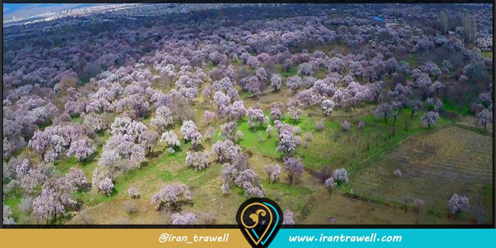باغستان سنتی قزوین کجاست