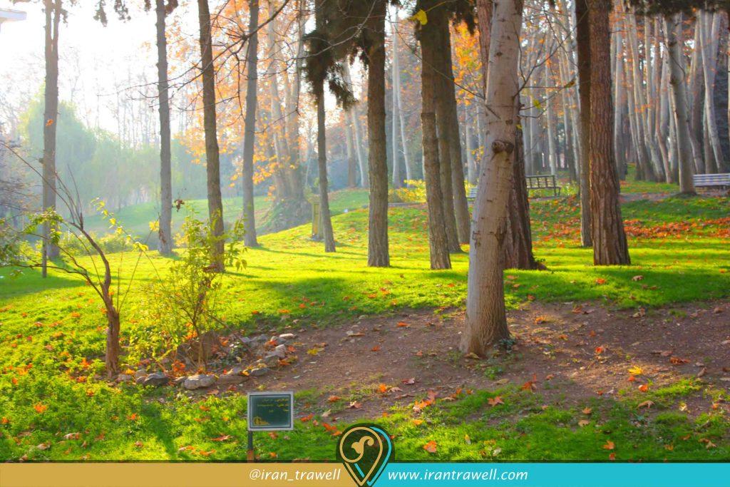 مجموعه جنگلی سعدآباد
